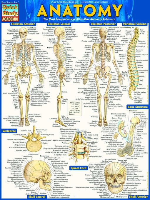 Anatomy study guide bones