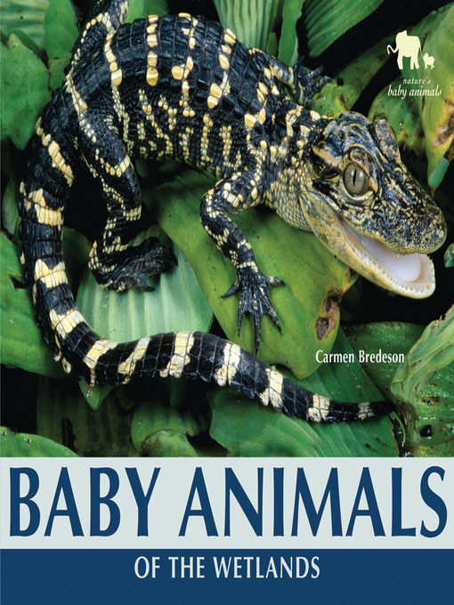 Cover of Baby Animals of the Wetlands