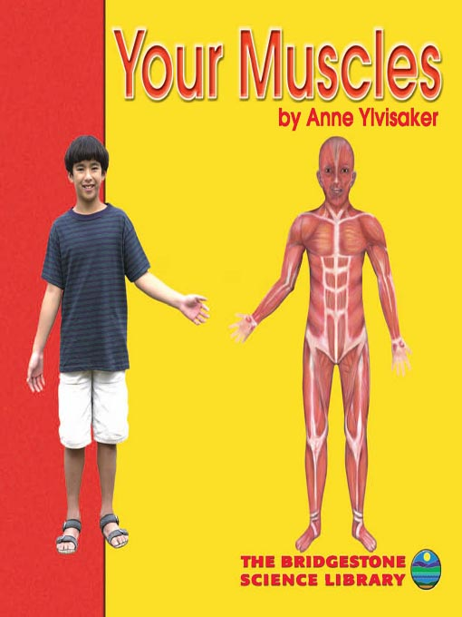 Title details for Your Muscles by Anne Ylvisaker - Available