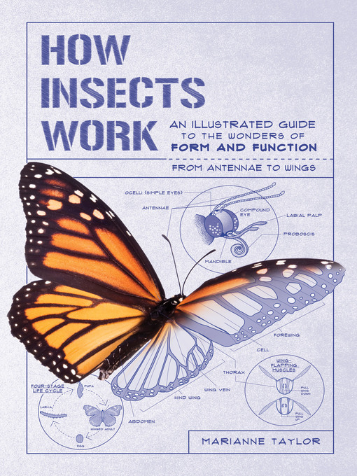 Title details for How Insects Work by Marianne Taylor - Available