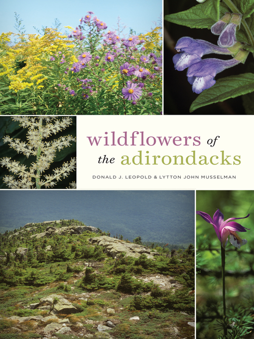 Title details for Wildflowers of the Adirondacks by Donald J. Leopold - Wait list