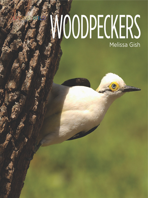 the study of the downie woodpeckers habitat and diet It wields a much longer bill than the downy woodpecker's almost thornlike bill more than 75% of the hairy woodpecker's diet is made up of insects.