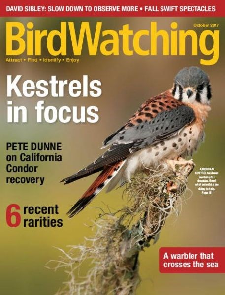 Title details for BirdWatching by Madavor Media - Wait list
