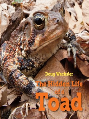 cover image of The Hidden Life of a Toad