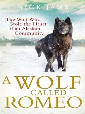 cover image of A Wolf Called Romeo