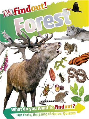 cover image of DKfindout! Forest