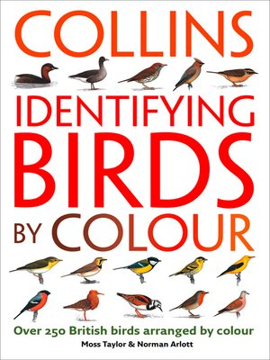 cover image of Identifying Birds by Colour