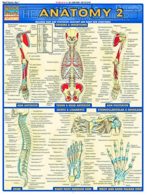 cover image of Anatomy 2--Reference Guide (8.5 x 11)