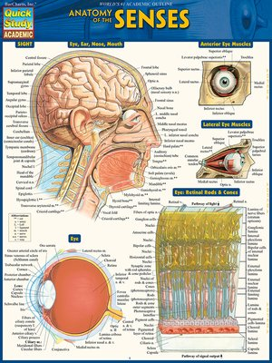 cover image of Anatomy of the Senses