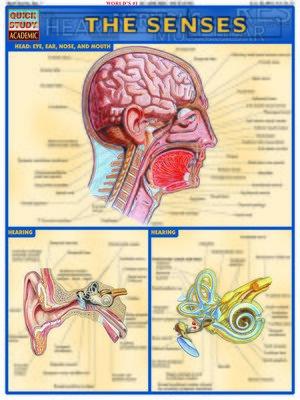 cover image of Senses