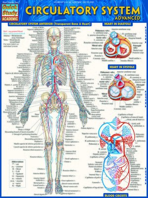 cover image of Circulatory System Advanced