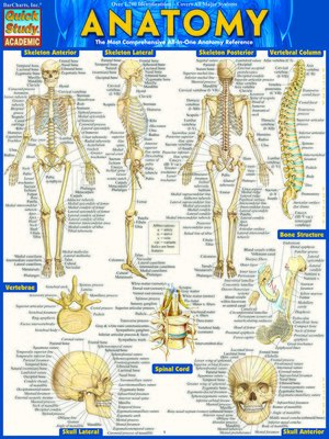 cover image of Anatomy--Reference Guide (8.5 x 11)