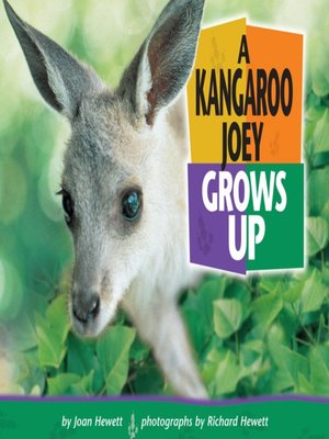 cover image of A Kangaroo Joey Grows Up