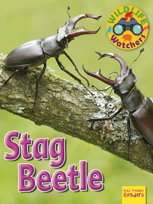 cover image of Stag Beetle