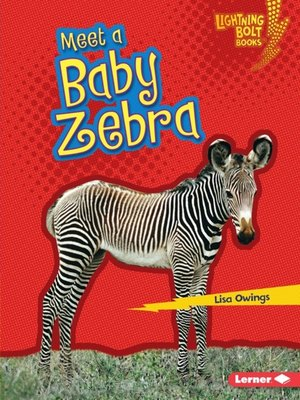 cover image of Meet a Baby Zebra