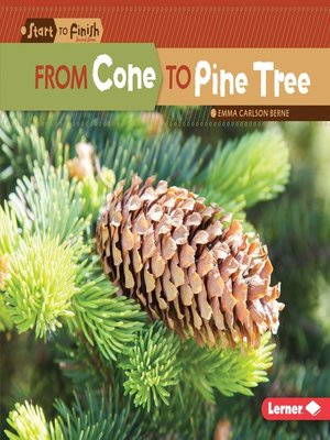 cover image of From Cone to Pine Tree