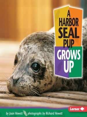 cover image of A Harbor Seal Pup Grows Up
