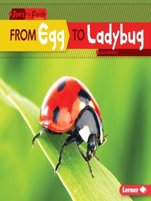 cover image of From Egg to Ladybug