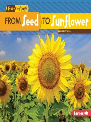 cover image of From Seed to Sunflower