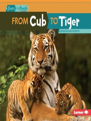 cover image of From Cub to Tiger