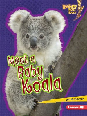cover image of Meet a Baby Koala