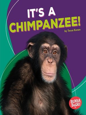 cover image of It's a Chimpanzee!
