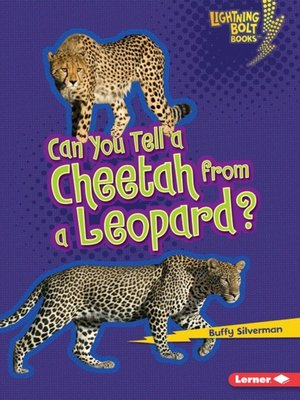 cover image of Can You Tell a Cheetah from a Leopard?