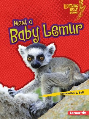 cover image of Meet a Baby Lemur