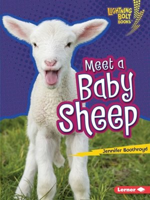 cover image of Meet a Baby Sheep