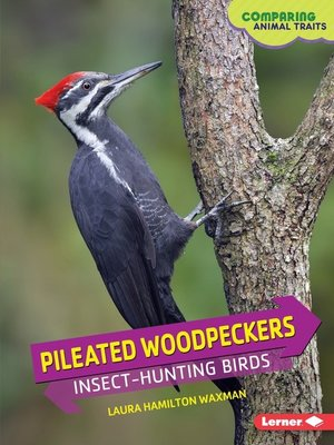 cover image of Pileated Woodpeckers