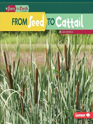 cover image of From Seed to Cattail