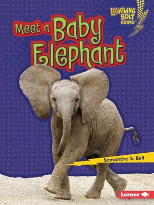 cover image of Meet a Baby Elephant