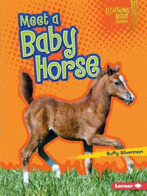 cover image of Meet a Baby Horse