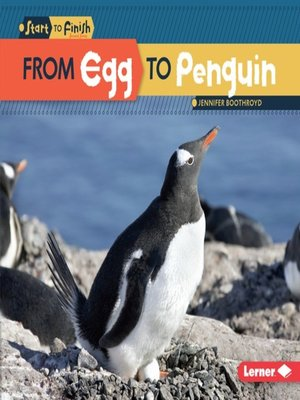 cover image of From Egg to Penguin