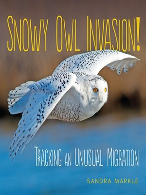cover image of Snowy Owl Invasion!