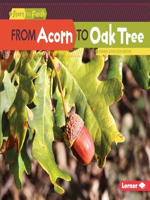 cover image of From Acorn to Oak Tree