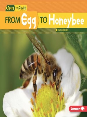 cover image of From Egg to Honeybee