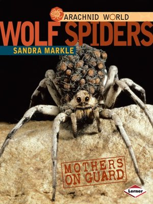 cover image of Wolf Spiders