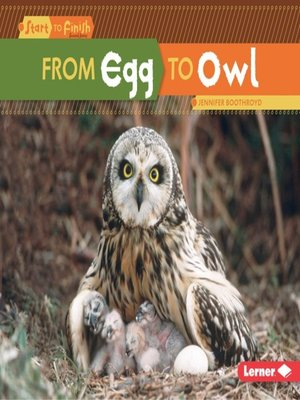 cover image of From Egg to Owl