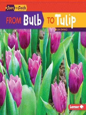 cover image of From Bulb to Tulip
