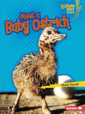 cover image of Meet a Baby Ostrich