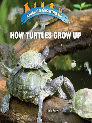 cover image of How Turtles Grow Up