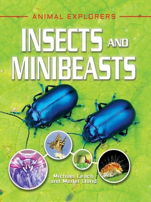cover image of Insects and Minibeasts