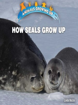 cover image of How Seals Grow Up