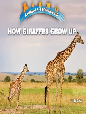 cover image of How Giraffes Grow Up
