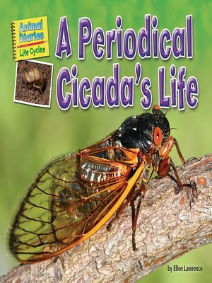 cover image of A Periodical Cicada's Life
