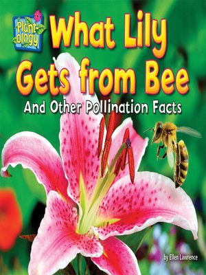 cover image of What Lily Gets from Bee