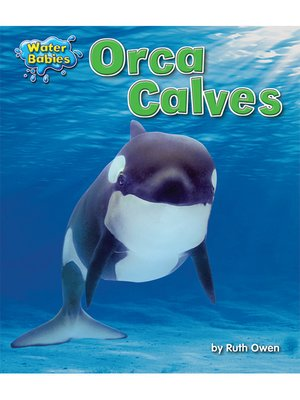cover image of Orca Calves