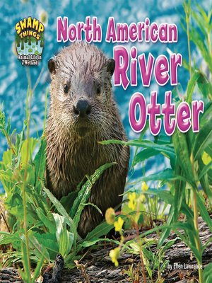 cover image of North American River Otter