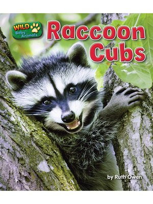 cover image of Raccoon Cubs